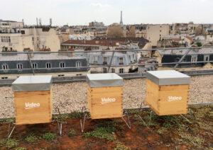 Valeo bee hives Apis Urbanica